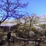 Los pastores de Belén